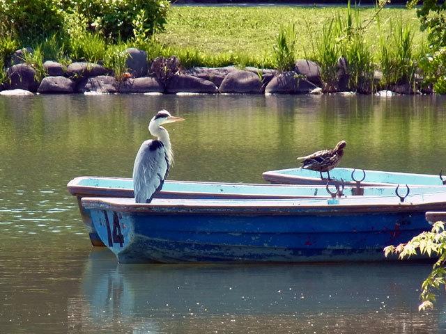 120603boat.jpg