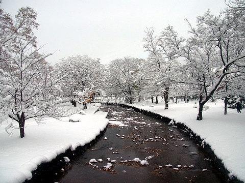 141115kamokamogawa.jpg