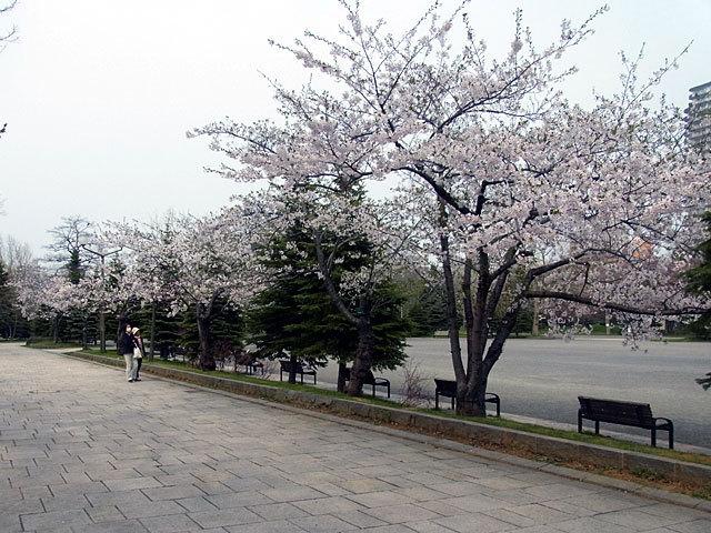 150428jiyuhiroba.jpg