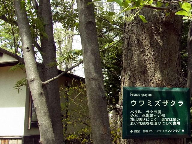 150501uwamizuzakura.jpg