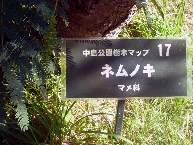 160812nemunoki1.jpg