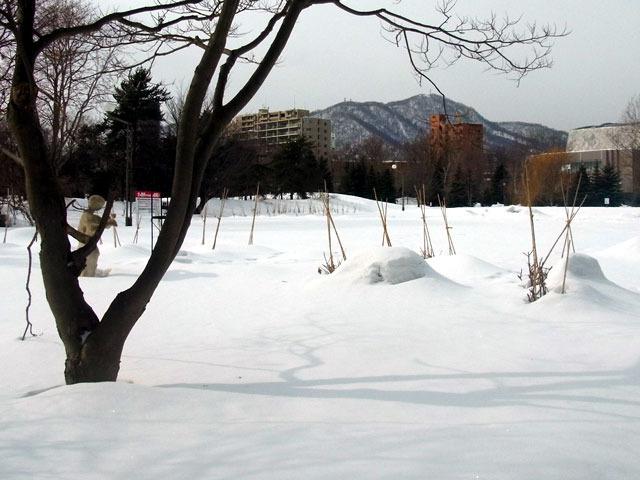 170204moiwayama.jpg