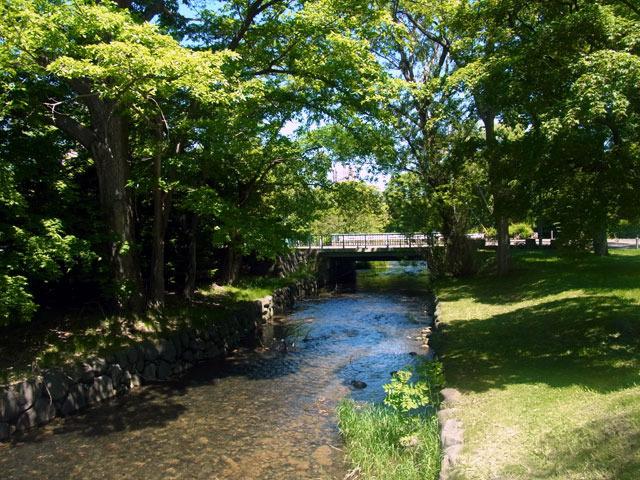 170605kamokamogawa.jpg