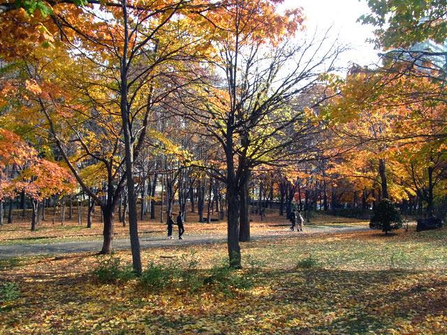 171103sakura.jpg