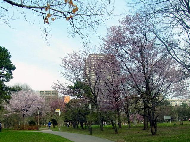 180428kaorinohiroba.jpg