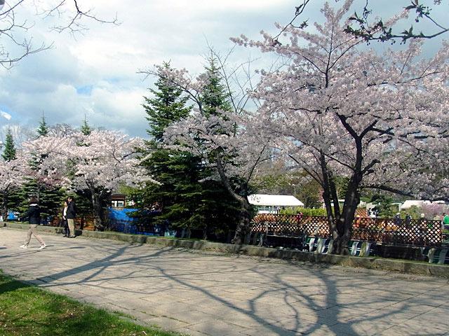 180504jiyuhirobayoko.jpg