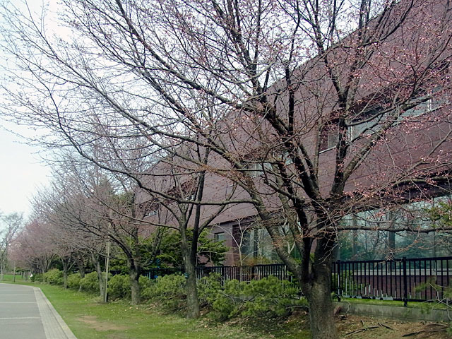190424sakura1.jpg