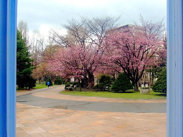200429sakura1.jpg