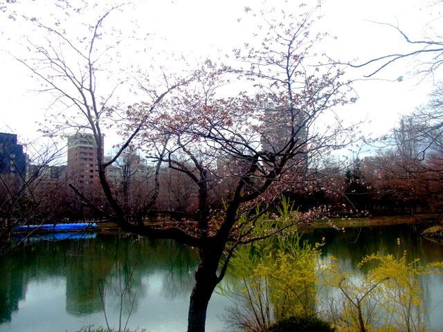 200429sakura2.jpg