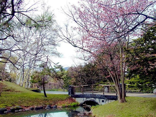 200429sakura3.jpg
