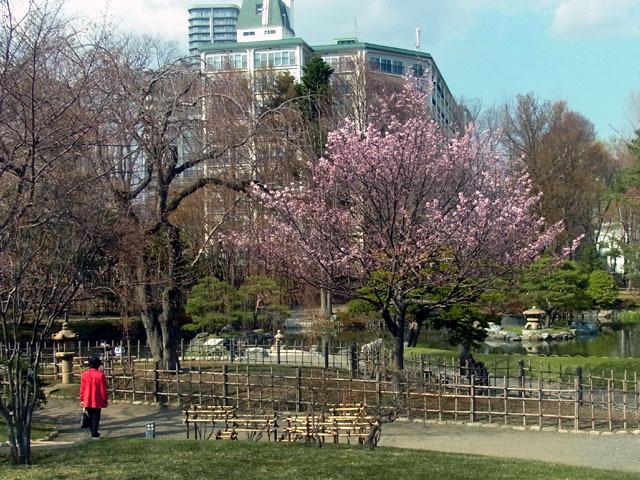 200430sakura2.jpg