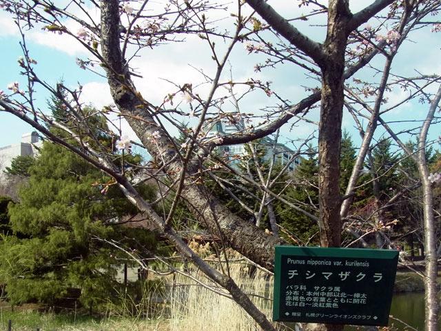 200430sakura3.jpg