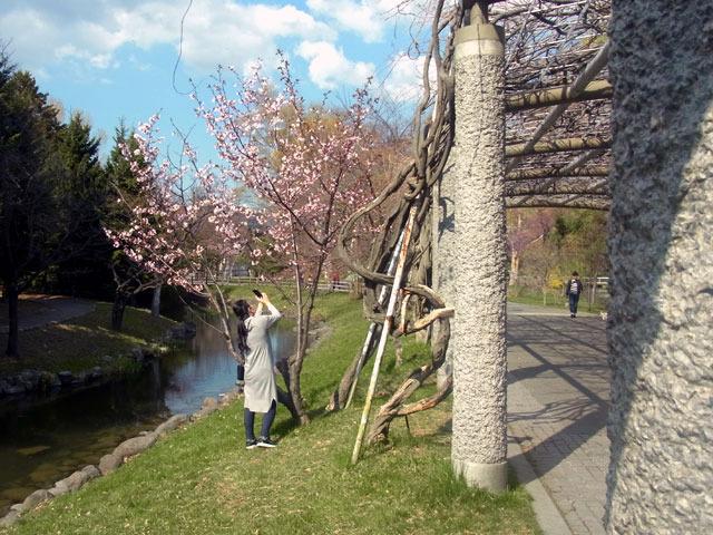200430sakura4.jpg