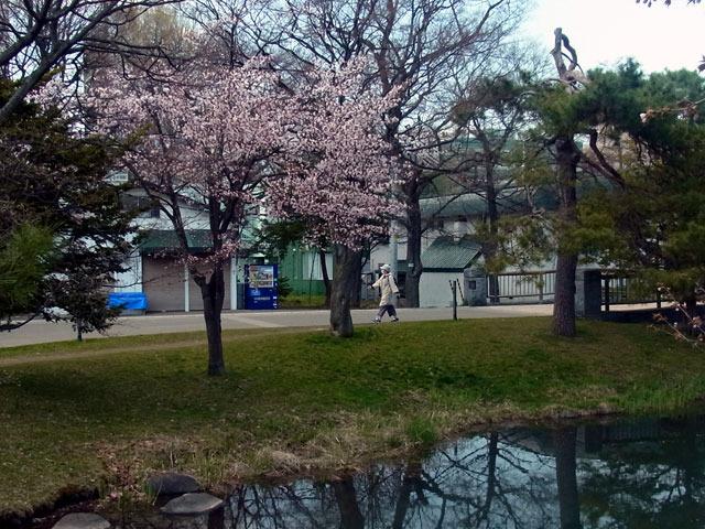 200430sakura5.jpg