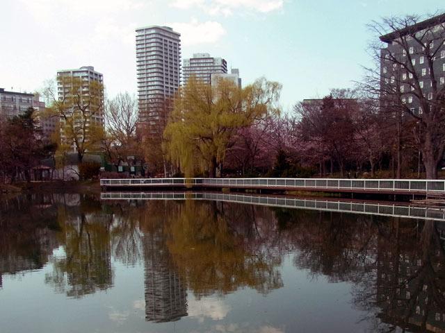 200430sakura6.jpg
