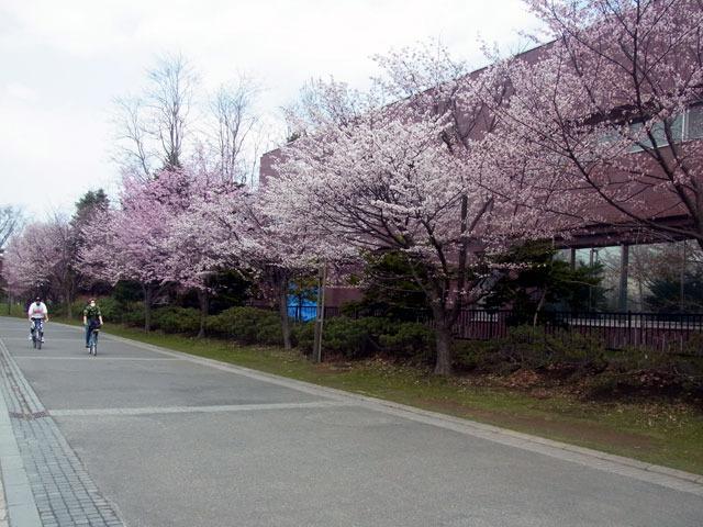 200501sakura1.jpg