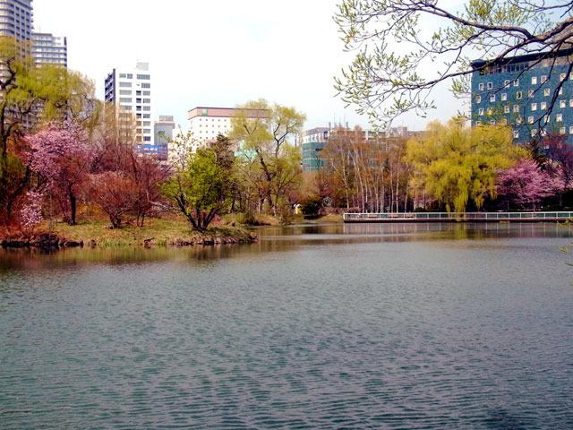 200501sakura4.jpg