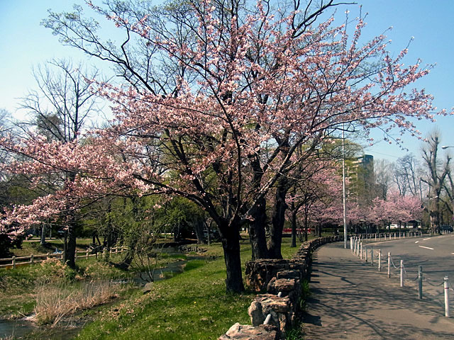 200502sakura2.jpg