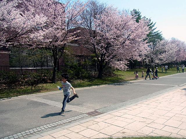 200502sakura3.jpg