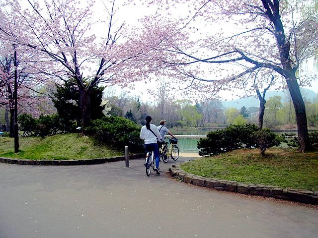 200503sakura5.jpg