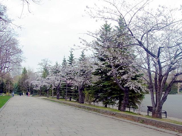 200504sakura1.jpg