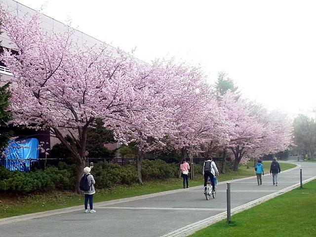 200504sakura2.jpg