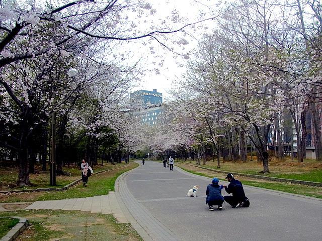 200504sakura4.jpg