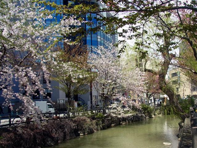 200505sakura5.jpg
