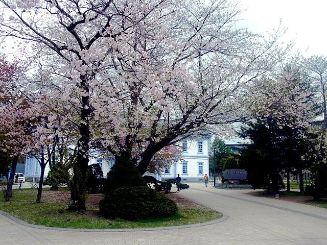 200506sakura1.jpg