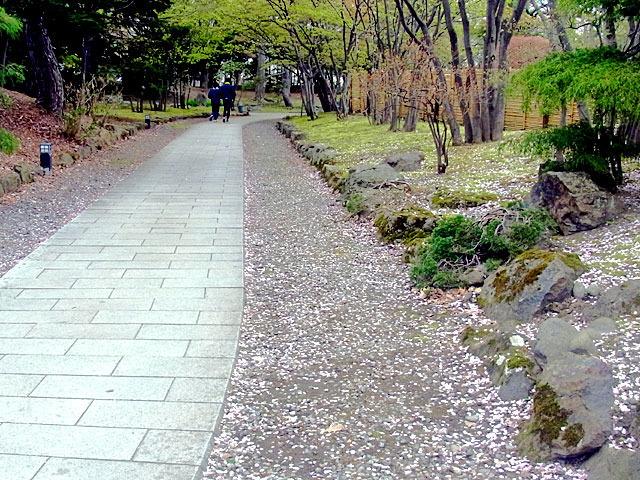 200506sakura2.jpg