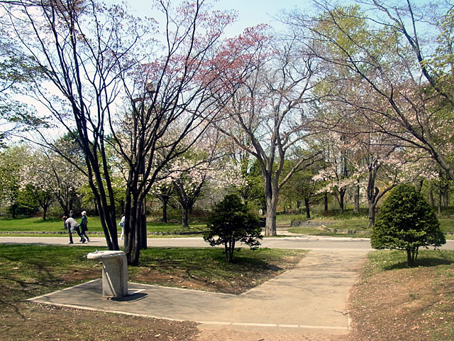 200508sakura4.jpg
