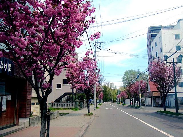 200512sakura1.jpg