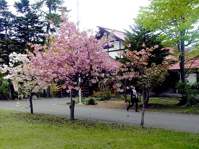 200518sakura2.jpg