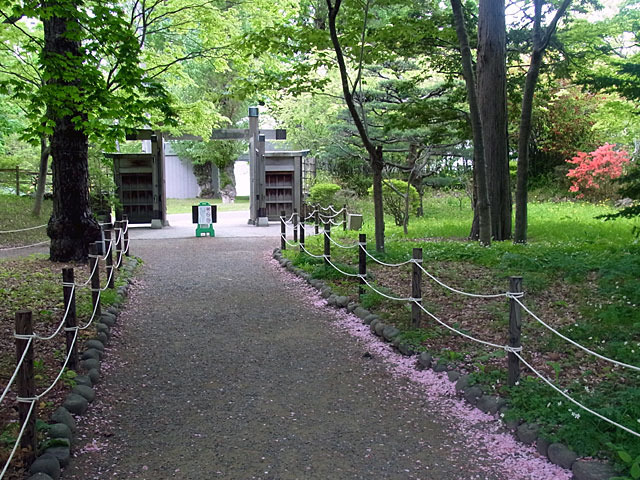 200524oibana2.jpg