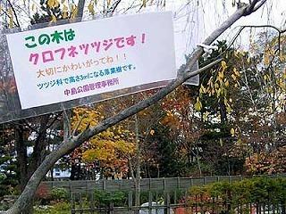 091102jumokufuda.jpg