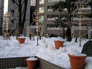 100204yukiakari2.jpg