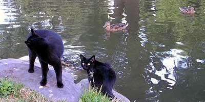 100901cats.jpg