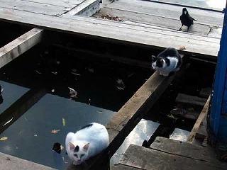 111113cats.jpg