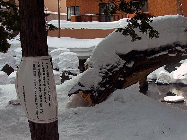 170129toubokukeiji.jpg