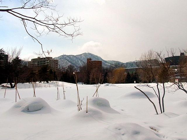 170225moiwayama.jpg