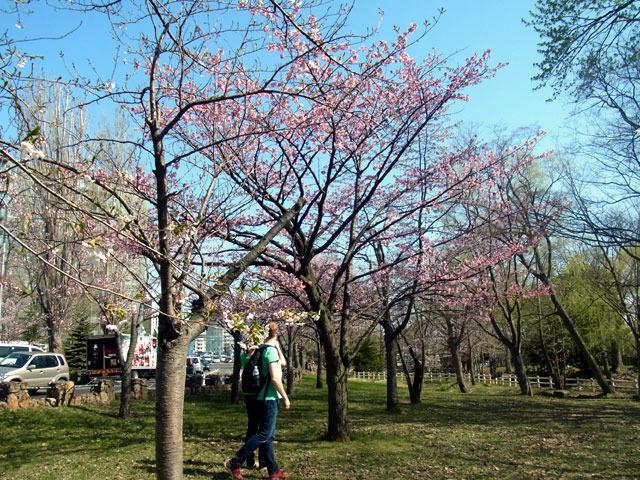 170503gyoukeidoori-thumbnail2.jpg