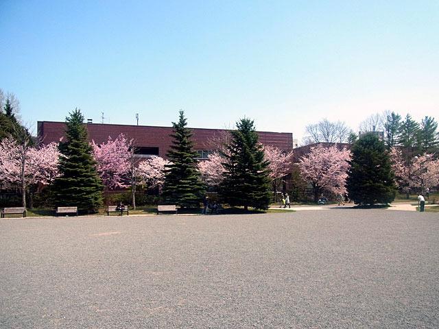 200502sakura4.jpg