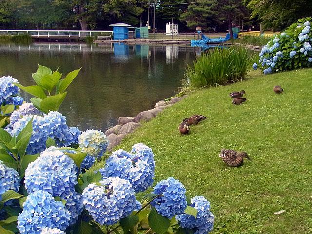 200729ajikamo.jpg