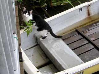 boatcat.jpg